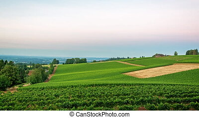 Early Morning Vineyard Time Lapse - Time Lapse video of the...