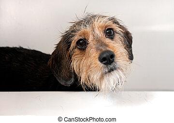 Dog In the Bath Tub