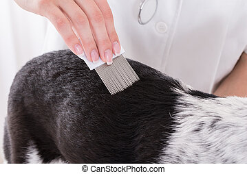 Vet Examining Dogs Hair With Comb - Close-up Of A Vet...
