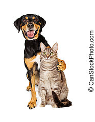 Funny Photo of Dog With Arm Around Cat - Funny photo of a...