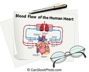 research papers blood flow