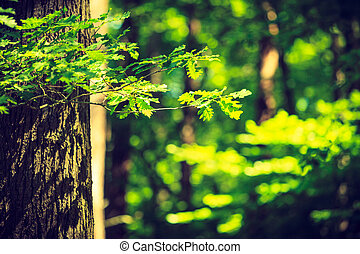 Sunlight breaking through trees. - Nature foliage outdoor...