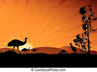 emu in sunset - a silhouette of emus and kangaroo in the...
