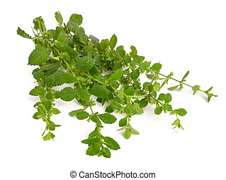 Melissa officinalis, known as lemon balm, balm, common balm,...