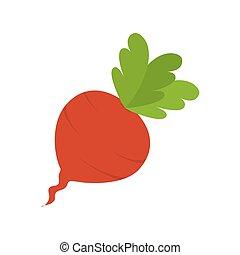 beet beetroot vegetable - beet beetroot food vegetable root...