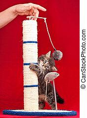 Curious fluffy kitten - Curious kitten on the scratching...