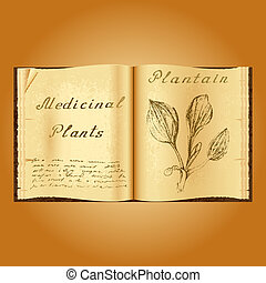 Plantain. Botanical illustration. Medical plants. Book...