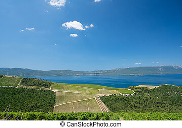 Vineyard in Croatia at the Adriatic coast - Vineyard in...