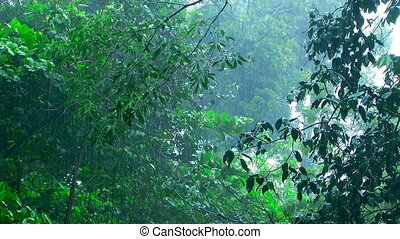 Rain cats and dogs in rainforest. Shooting with tripod.