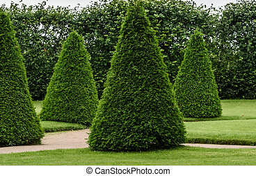 gardening and beautiful smooth trimmed trees in Park -...