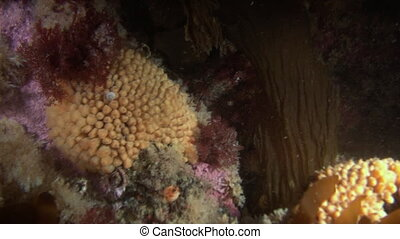 White anemones and yellow sponge on a stone floor Beautiful...
