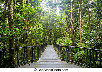 Mossman Gorge View - Footpath thru dense rainforest in...