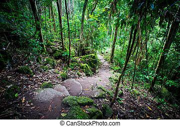 Mossman Gorge View - Footpath thru dense rainforest in...