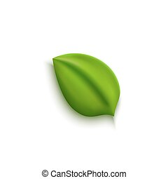 Realistic vector green leaf, environment and nature icon