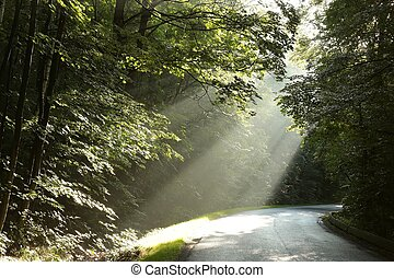 Deciduous forest after rainfall - Morning rays in the...