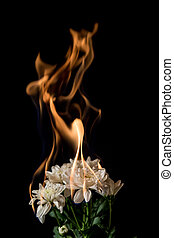 white flower on fire with flames on black background