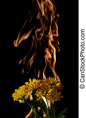 yellow flower on fire with flames on black background