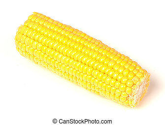 Corn on the Cob, sweetcorn on an isolated white background