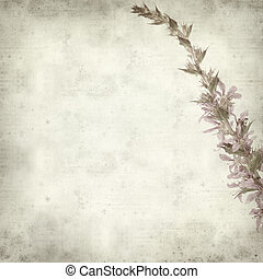 textured old paper background with spiked purple loosestrife...