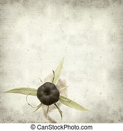 textured old paper background with poisonous berry of true...