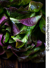 Organic Red Oakleaf lettuce on dark wooden background. Close...
