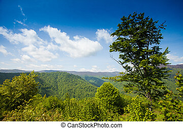 Wonderful scenery of green moutain with green trees is on...