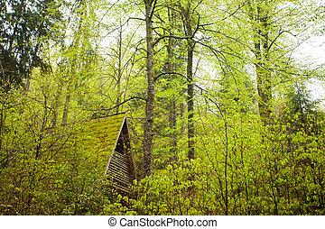 Summer dense forest - Beautiful summer view of green dense...