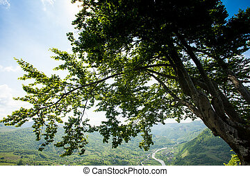 Wonderful scenery of green moutain - Amazing scenery of...