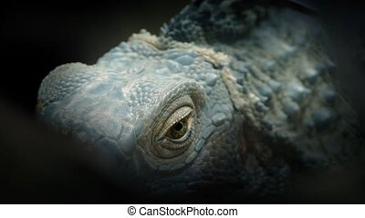 Lizard Eye Closeup Abstract - Dramatic obscured shot of a...