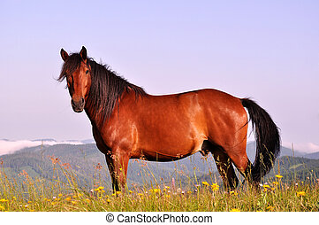 Beautiful brown horse in the mountains upon blue sky...