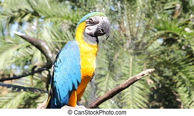 Parrot - Tropical Bird