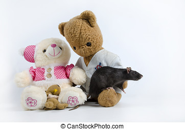 Rats and old soft toys. - Intelligent and funny pets...