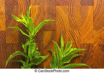 Fresh spearmint herb