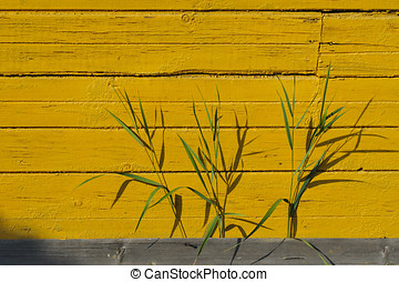 Green grass - Close up of green grass on yellow wall...
