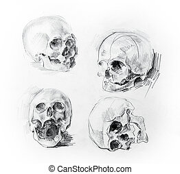 Skull study drawing Pencil on paper - illustration with two...