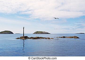 norvégien, pierre, mouettes, mer