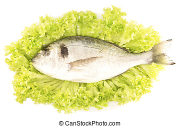 Dorade fish on a lettuce leaf