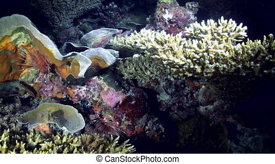 Underwater landscape sea of coral reef at night. Amazing,...