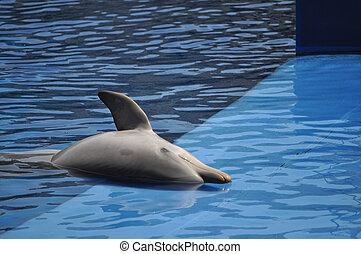 Dolphin mammal animal