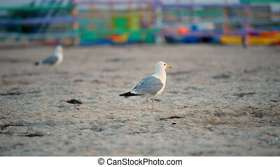 Several gulls - Gulls at a sandy beach after a heavy storm...