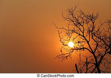 árbol, tarde, silueta, ocaso