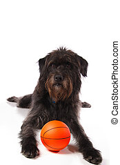 Shaggy dog with a basketball - A shaggy mixed breed dog with...
