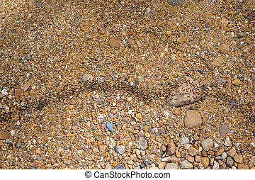 Army of lots of black ants walking on pebble path traveling...
