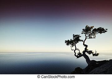 albero, e, mare, a, tramonto, Crimea, paesaggio