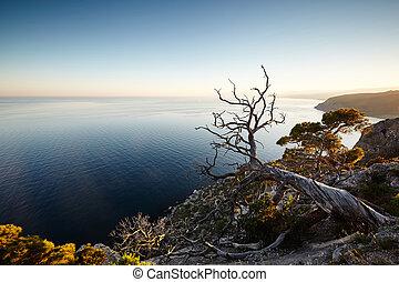 albero, e, mare, a, tramonto