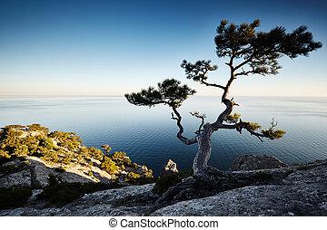 crimea, albero, paesaggio, mare, tramonto