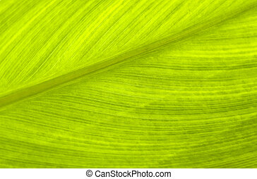 Going Green - Abstract image showing leaf detail ideal for...