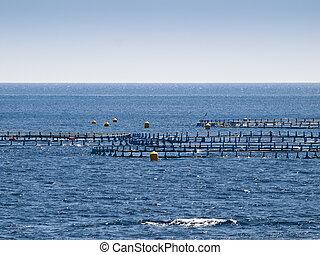 Offshore Fish Farm - Detail of an offshore fish farm pen