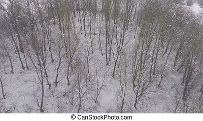 aerial view of the forest in winter time.