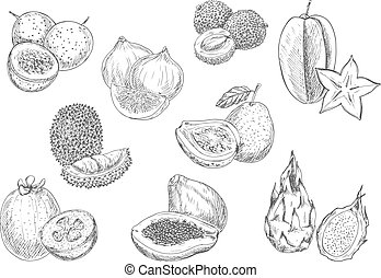 Exotic fruits pencil sketch icons - Exotic and tropical...